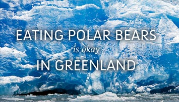 Eating Polar Bears Is Okay in Greenland